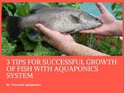 3 Tips For Successful Growth Of Fish With Aquaponics System