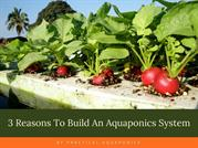 3 Reasons To Build An Aquaponics System