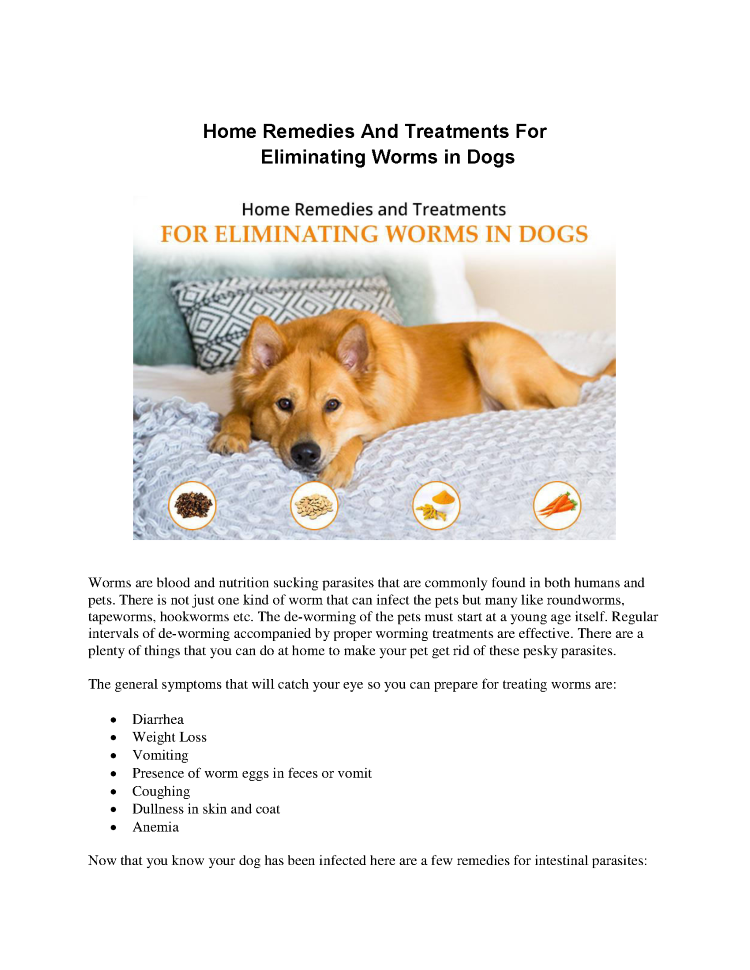 Home Remedies And Treatments for Eliminating Worms in Dogs