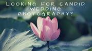 Looking for Candid Wedding Photography