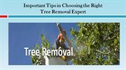 Important Tips in Choosing the Right Tree Removal Expert