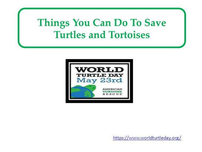 Things You Can Do to Save Turtles And Tortoises |authorSTREAM