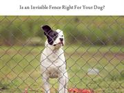 Is an Invisible Fence Right For Your Dog?