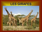 POWER POINT GIRAFES