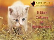 Reliable Cat Sitter in Melbourne