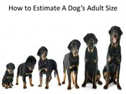How to Estimate A Dog's Adult Size