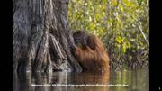 Winners of the 2017 National Geographic Nature Photographer of the Yea