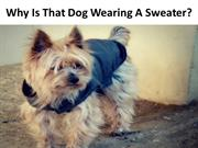 Why Is That Dog Wearing A Sweater?