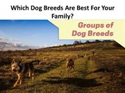 Which Dog Breeds Are Best For Your Family?