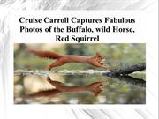 Cruise Carroll Captures Fabulous Photos of the Buffalo, wild Horse, Re