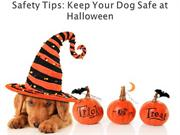 Safety Tips Keep Your Dog Safe at Halloween