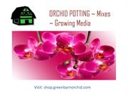 Shop Online Orchid Mixes for Your Beautiful Orchids