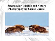 Spectacular Wildlife and Nature Photography by Cruise Carroll