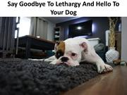 Say Goodbye To Lethargy And Hello To Your Dog