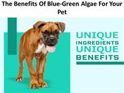 The Benefits Of Blue-Green Algae For Your Pet