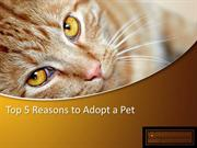 Top 5 Reasons to Adopt a Pet