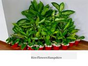 How Extravagant Are The Plants For Hire in Hampshire