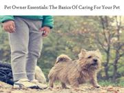 Pet Owner Essentials: The Basics Of Caring For Your Pet
