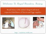 Welcome To Royal Breeders Aviary -The best Pet Birds & Parrots Breeder