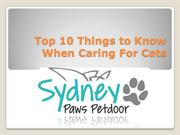 Top 10 Things to Know When Caring For Cats