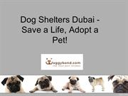 Dog Shelters Dubai Save a Life, Adopt a Pet