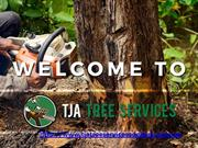 Tree Removals Adelaide  | TJA Tree Services PPT