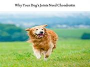 Why Your Dog's Joints Need Chondroitin