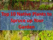 Top 10 Native Plants to Spruce up Your Garden