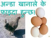 benifits of egg in nepali ok