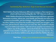 Swimming Pigs Bahamas Trips From Nassau Excursions