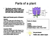 Parts of a plant (powerpoint)