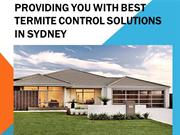 Providing You With Best Termite Control Solutions In Sydney
