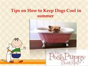 Tips on How to Keep Dogs Cool in summer