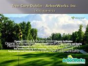 Tree Removal Dublin CA