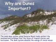 Why are Sand Dunes Important - Sand Dune Stabilization