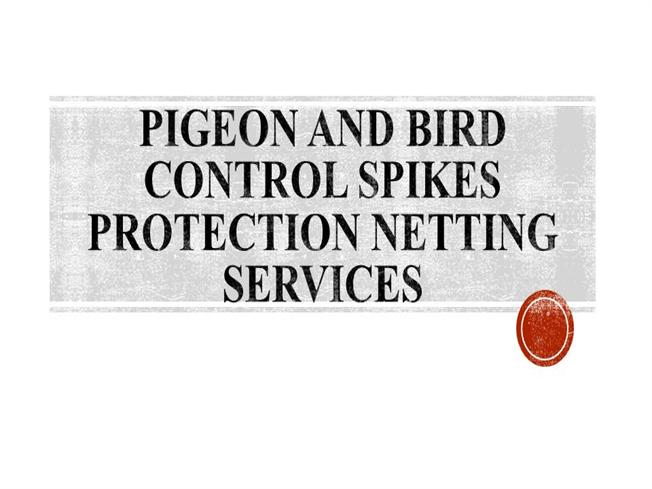 Pigeon And Bird Control Spikes Protection Netting Services
