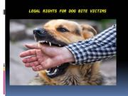 Legal Rights for Dog bite Victims