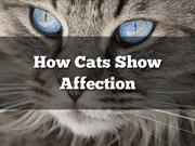 How Cats Show Affection