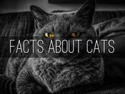 FACTS ABOUT CATS