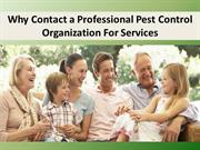 Why Contact a Professional Pest Control Organization For Services