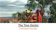 Professional Tree Pruning Services Sydney
