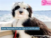 Some Important Pet Care Tips in Cold Weather