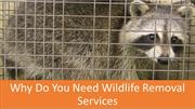 Why Do You Need Wildlife Removal Services