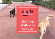 The benefits of choosing a Dog Walker in San Jose