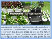 Difference Between Aquaponic and Hydroponic