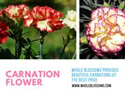 Know More About the Carnation Flowers