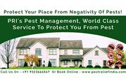 Pest Management Services to Protect you and Your Family