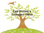 East Windsor Plants