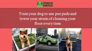Train your dog to use pee pads and cleaning your floor every time