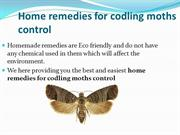 Easy home remedies for thrips removal
